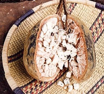 fruto e sementes de baobá