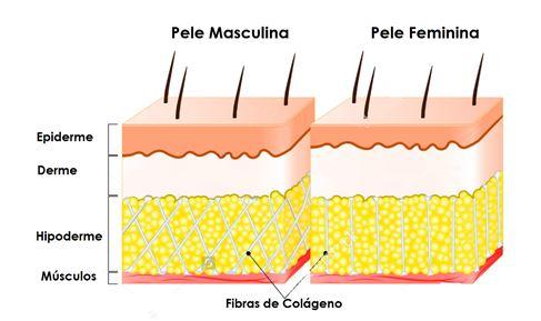 (Figura 01: Esquema gráfico que representa a pele masculina à esquerda e a pele feminina à direita).