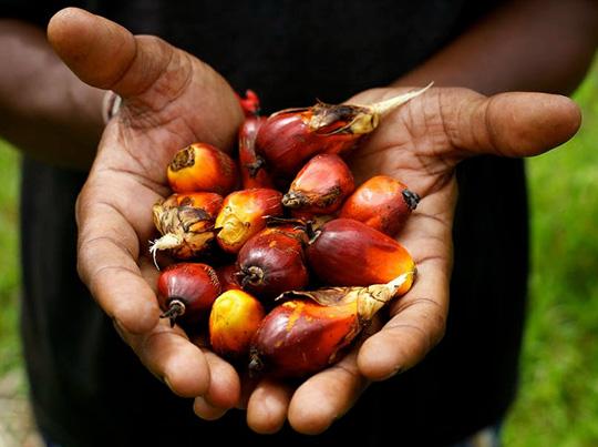 Membro do RSPO – A Focus Química garante a produção e uso sustentável do óleo de palma